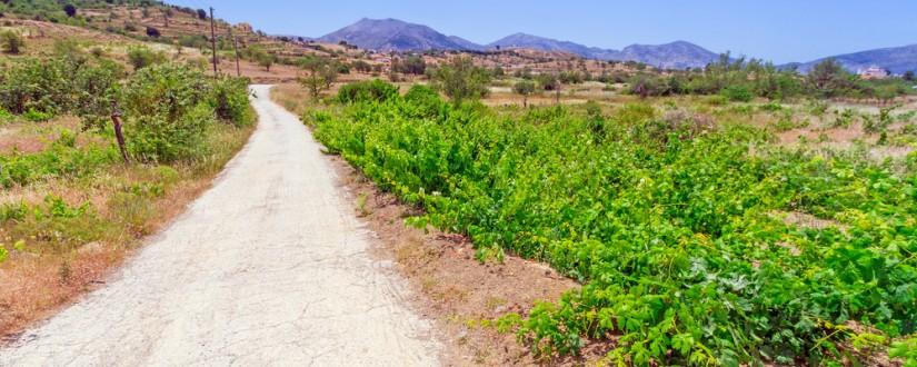 Виноградники Крита